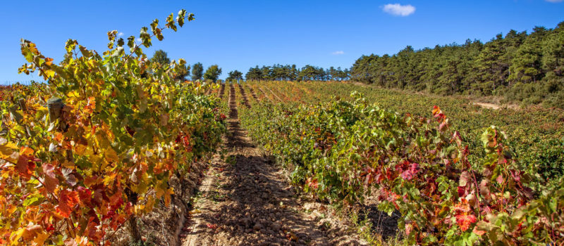 Enoturismo Rioja experiencia en viñedo Hacienda El Ternero